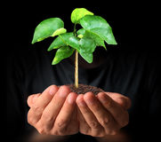 Man hands holding plant Stock Photos