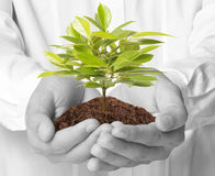 Man hands holding plant Royalty Free Stock Photo