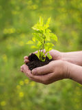 Man hands holding young plant Royalty Free Stock Photos