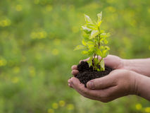 Man hands holding young plant Stock Photo