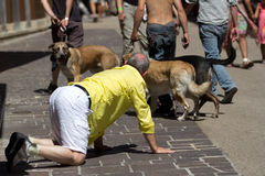 Man on hands and kneels looks at dogs. AURILLAC, FRANCE - AUGUST 22: a man on hands and knees in front of dogs as part of the Aurillac International Street Royalty Free Stock Photography