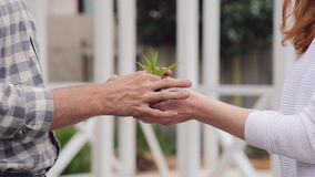 A man hands passes a sprout with handful of earth into young woman hands. stock video