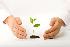 Man hands with plant Stock Images