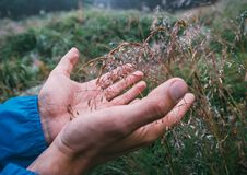 Man hands take dew drops from the grass Stock Photography