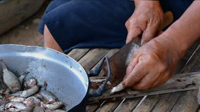 Man hands using kitchen knife prepare fish for cooking stock footage