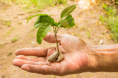 Man hands and yong plant Royalty Free Stock Photography