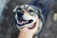 Man handslagen met genoegen en tederheid op het hoofd van een leuke bruine hond in openlucht in de lente royalty-vrije stock fotografie