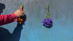 Man hanging flowers and horseshoe on blue wooden wall stock footage