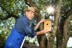 Man hanging a Nest Box into a tree Royalty Free Stock Photography