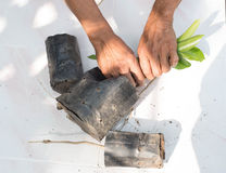 Man hans are destroying saplings concept destruction of natural Royalty Free Stock Photo