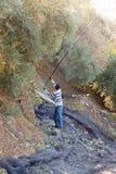 Man harvesting  black olives Royalty Free Stock Images