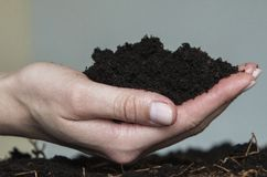 Beautiful female hand holds the ground for plants. Man has earth for plants in his hand stock photography
