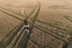 Man has a rest and dream in countryside. Young man sitting on the chair in the field. Aerial panoramic view. Man has a rest and dream in countryside. Young man Stock Photography