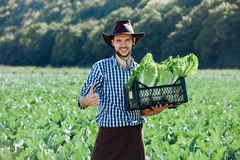 Man hat basket drawer hands portrait young farmer field sun harvest cabbage greens worker owner plantation ripe hold box vegetable royalty free stock image