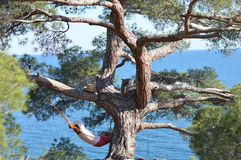 Man in hat in a hammock on pine tree in Crimea a s Stock Photos