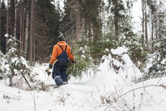 Man with hatchet in the hands of carries Christmas tree in the winter forest Stock Photography