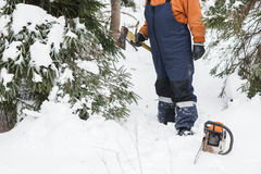 Man with hatchet in the hands of cuts Christmas tree in the winter forest Stock Photo
