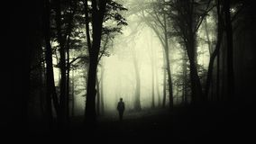 Man in creepy forest with fog on Halloween. Man in haunted creepy forest with fog on Halloween night. Dark haunted forest background. Man silhouette in surreal stock image