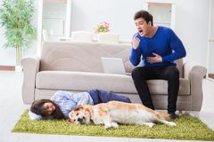 The man having allergy from dog fur Royalty Free Stock Photo