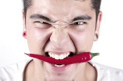 Man having fun, holding red hot chilly pepper in mouth. Royalty Free Stock Photos