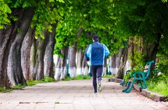 Man having a morning run on alley. Of Kiev embankment in Uzhgorod. lovely chestnut alley in summertime stock photos