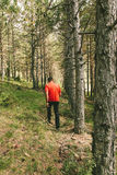 Man Having a Walk in the Forest Royalty Free Stock Image