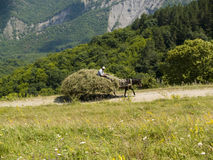 Man on the hay. Donkey in front. Beauty country view Royalty Free Stock Photography