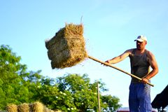 Man with hay bales Stock Image