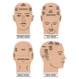 Man head divisions scheme Royalty Free Stock Image
