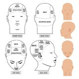 Man head divisions scheme Stock Photography