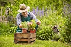 Man herbs plants garden Stock Photos