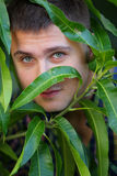 Man hiding behind tree leafs Royalty Free Stock Photography