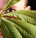 Man hiding with leaves stock images