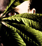 Man hiding with leaves. Royalty Free Stock Photos