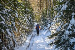 Man hiker with backpack traveling in winter snowy forest landscape. Active vacations outdoor concept Royalty Free Stock Photography