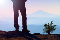 Man hiker legs in tourist boots stand on mountain rocky peak. Small pine bonsai. Stock Photography