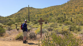 A Man Hikes the Go John Trail, Arizona Stock Images