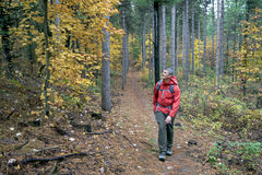 Man Hiking in Forest Royalty Free Stock Photos