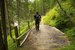 Man hiking in the forest on the bridge stock photos