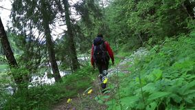 Man hiking through the forest. Camera moves up. Man hikes on mountain trail stock video footage