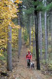 Man Hiking in Forest with Dog Stock Images