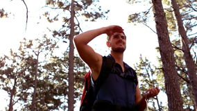 Man hiking through a forest stock footage