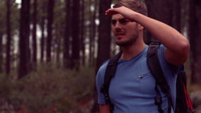 Man hiking through a forest. In slow motion stock video