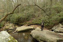 Man hiking in forest in South Carolina Stock Photos