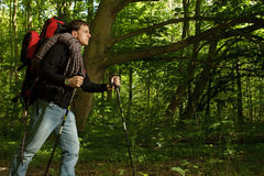 Man hiking through forested area Stock Images
