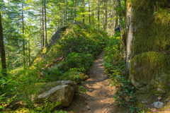 Man Hiking Serene Trail Stock Image