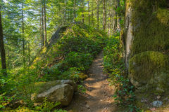Man Hiking Serene Trail. Man in 40's hiking a serene trail clustered with large granite boulders Royalty Free Stock Photos
