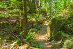 Man Hiking Serene Trail Royalty Free Stock Photo