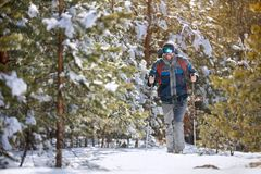 Man hiking in snowy forest Royalty Free Stock Images