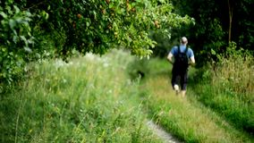 Man hiking in summer stock footage
